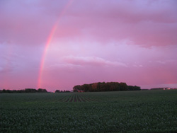 Early summer rainbow over the cornfield.